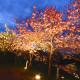 櫻花燈光秀、櫻花隧道