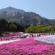 지면패랭이꽃 축제
