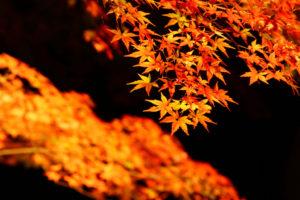 koyo_lightup_01