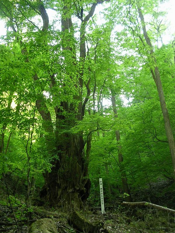 彩の国ふれあいの森
