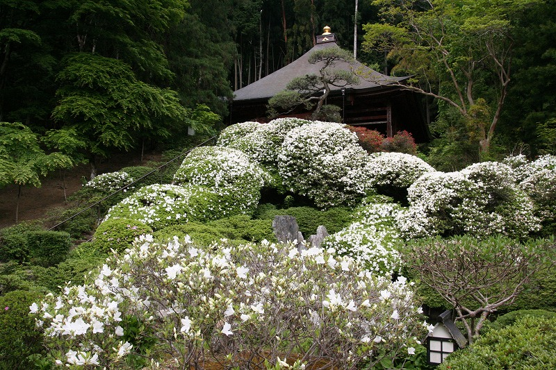 札所30番・瑞竜山 法雲寺